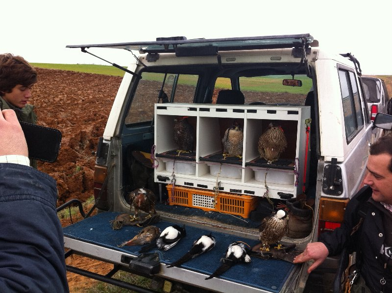jornada-cetrera-caza-halcones-urracas-perdiz